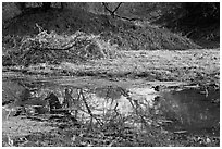 Pond and bird, Keoladeo Ghana National Park. Bharatpur, Rajasthan, India ( black and white)
