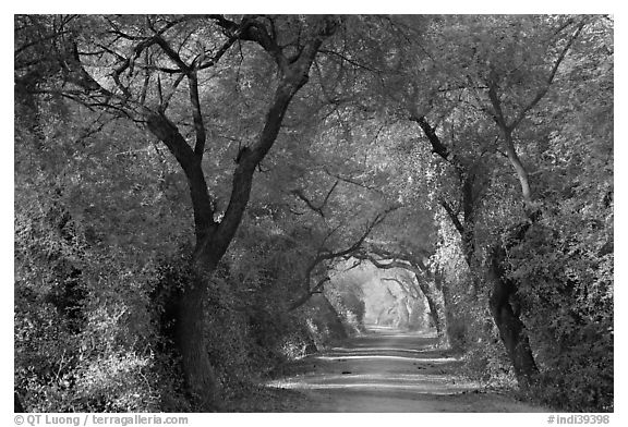 Path in Woods Black And White Black And White Trees Path