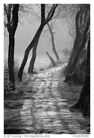 Secondary path, Keoladeo Ghana National Park. Bharatpur, Rajasthan, India (black and white)