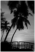 Palm trees and fence at sunrise. Goa, India ( black and white)