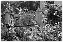 Flowers in yard of Convent of St Monica , Old Goa. Goa, India (black and white)
