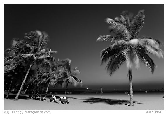 People sitting on bench below palm trees at twilight, Miramar Beach. Goa, India (black and white)
