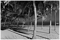 Palm trees and Miramar Beach at twilight. Goa, India (black and white)