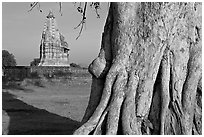Javari Temple and tree, Eastern Group, late afternoon. Khajuraho, Madhya Pradesh, India ( black and white)