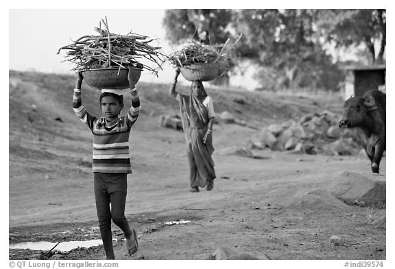 Villagers gathering wood. Khajuraho, Madhya Pradesh, India (black and white)