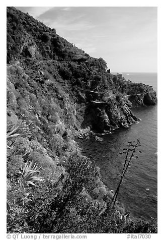 Coastline and cliffs along the Via dell'Amore (Lover's Lane), near Manarola. Cinque Terre, Liguria, Italy (black and white)