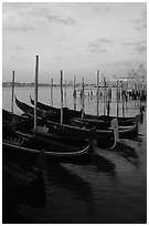 Parked gondolas, Canale della Guidecca, Santa Maria della Salute church at dawn. Venice, Veneto, Italy ( black and white)