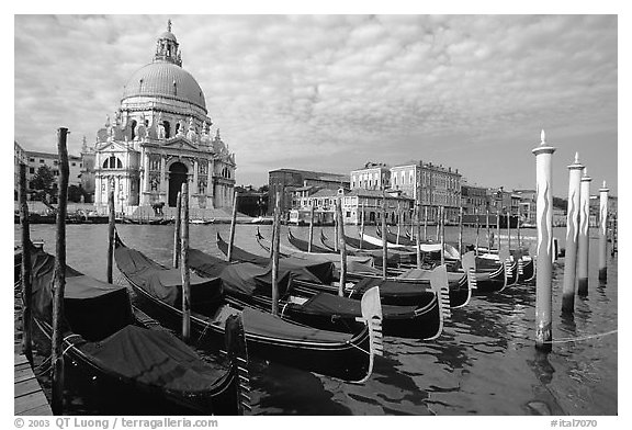 Black and white picture photo gondolas grand canal santa maria della salute church morning venice veneto italy