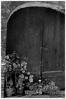 Old wooden door and flowers. San Gimignano, Tuscany, Italy (black and white)