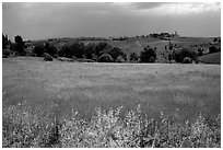 Countryside. Tuscany, Italy ( black and white)