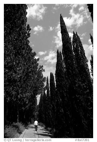Alley bordered by cypress trees. Tuscany, Italy (black and white)