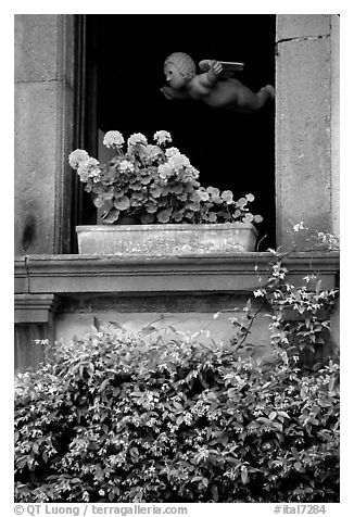Window with flowers. Orvieto, Umbria (black and white)