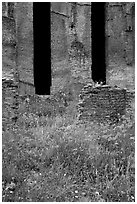Red poppies and ruins of the Praetorium, Villa Hadriana. Tivoli, Lazio, Italy (black and white)