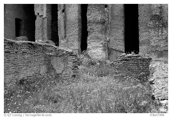 Red poppies and ruins of the Praetorium, Villa Adriana. Tivoli, Lazio, Italy (black and white)