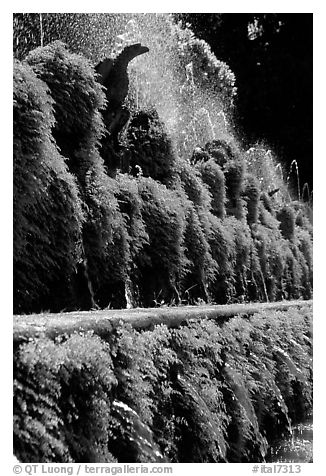 Fountains in the garden of Villa d'Este. Tivoli, Lazio, Italy (black and white)