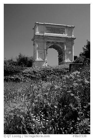 Popies and Arch of Titus, Roman Forum. Rome, Lazio, Italy (black and white)