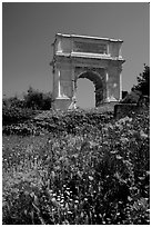 Popies and Arch of Titus, Roman Forum. Rome, Lazio, Italy ( black and white)