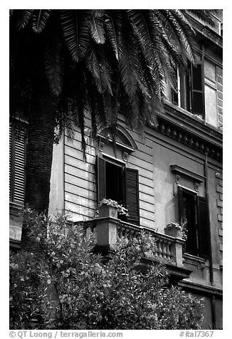 Palm tree and building. Rome, Lazio, Italy (black and white)