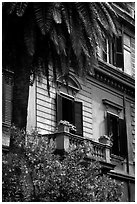 Palm tree and building. Rome, Lazio, Italy ( black and white)