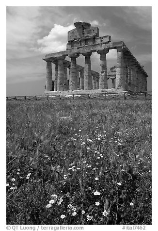 Wilflowers and Tempio di Cerere (Temple of Ceres). Campania, Italy (black and white)
