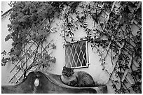 Cat and white walls with red flowers, Positano. Amalfi Coast, Campania, Italy ( black and white)