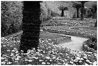 Gardens of Villa Rufulo, Ravello. Amalfi Coast, Campania, Italy ( black and white)