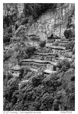 Cliffs and hillside terraces cultivated with lemons. Amalfi Coast, Campania, Italy (black and white)