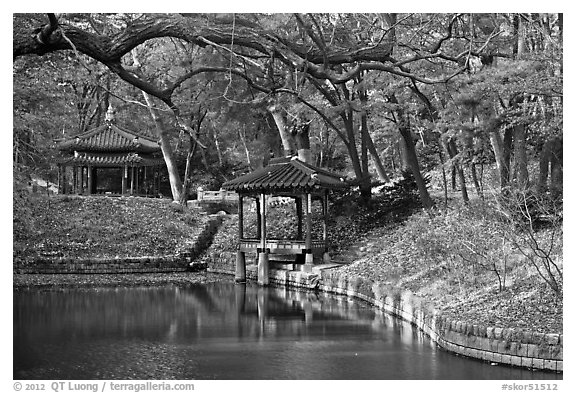 Pond in autumn, Changdeokgung Palace gardens. Seoul, South Korea (black and white)