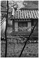 Bright autumn leaves and traditional architecture, Yeongyeong-dang, Changdeok Palace. Seoul, South Korea (black and white)