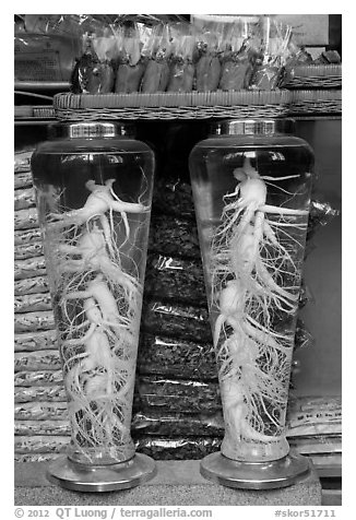 Gingseng roots in jars, Yangnyeongsi, Namseongno. Daegu, South Korea (black and white)