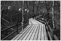Elevated boardwalk near Haeinsa. South Korea ( black and white)