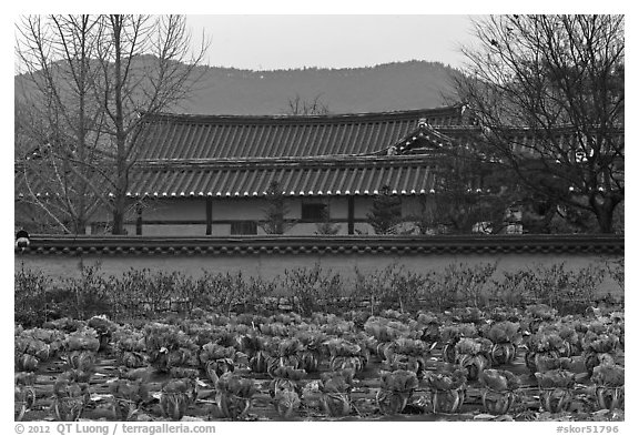 Cabbage field and residence. Hahoe Folk Village, South Korea (black and white)