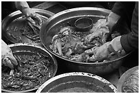 Hands seen mixing kim chee. Gyeongju, South Korea ( black and white)