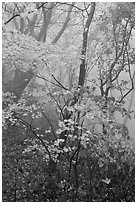 Autumn leaves in fog, Seokguram. Gyeongju, South Korea (black and white)