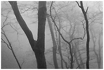 Forest in fog, Seokguram. Gyeongju, South Korea ( black and white)