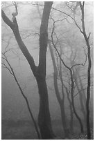 Trees in fog, Seokguram. Gyeongju, South Korea (black and white)