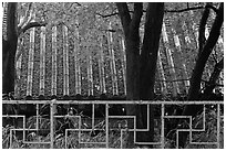 Fence with Buddhist symbol, and roof with fallen leaves, Bulguksa. Gyeongju, South Korea ( black and white)