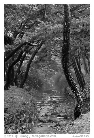 Stream flowing over terraces, Mt Namsan. Gyeongju, South Korea (black and white)