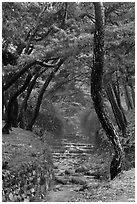 Stream flowing over terraces, Mt Namsan. Gyeongju, South Korea ( black and white)
