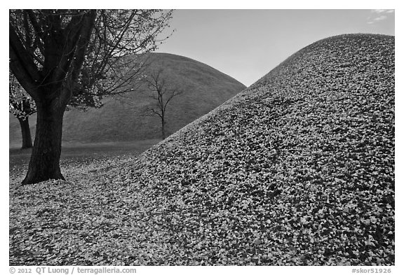 Grassy burial mounds in autumn. Gyeongju, South Korea (black and white)