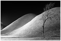 Tree and illuminated barrows at night. Gyeongju, South Korea (black and white)