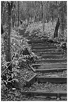 Steps of Eorimok trail, Hallasan National Park. Jeju Island, South Korea ( black and white)