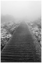 Boardwalk and fog, Eorimok trail, Mount Halla. Jeju Island, South Korea (black and white)