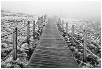 Boardwalk trail in frozen landscape, Hallasan. Jeju Island, South Korea (black and white)