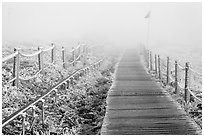 Frozen path and fog, Yeongsil trail, Hallasan. Jeju Island, South Korea ( black and white)