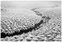 Frozen meadow and streambed,  Mount Halla. Jeju Island, South Korea (black and white)