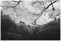 Pinnacles and bare branches, Mt Halla. Jeju Island, South Korea (black and white)