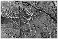 Bare forest, Hallasan National Park. Jeju Island, South Korea (black and white)