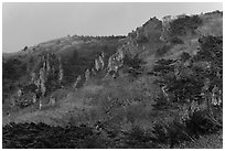 Forest and pinnacles, Hallasan National Park. Jeju Island, South Korea (black and white)
