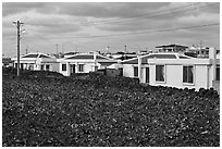 Houses with blue roofs, Seongsang Ilchulbong. Jeju Island, South Korea ( black and white)